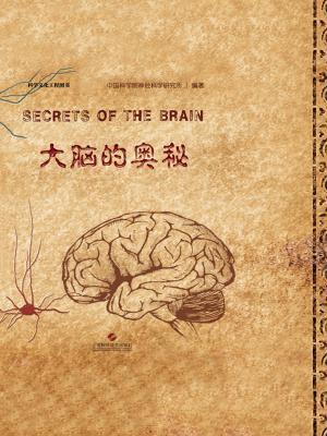 大脑的奥秘[精品]