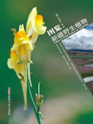 图览新疆野生植物